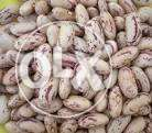 Looking for Supply of Samp, sorghum and sugar beans, urgently