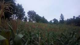 120 acres laikipia