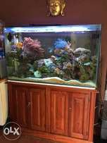 Core marine fish tank with fish