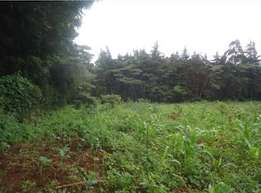 Quarter acre land in Ngong Ololua plot for sale