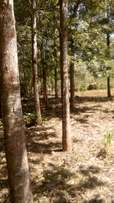 0.5 acres karatina for sale