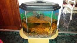 Fish tank for sale with accessories