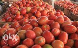 Fresh Tomatoes LONG LASTING