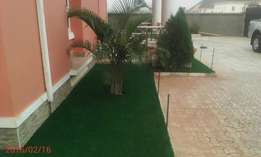 Carpet grass per square meters