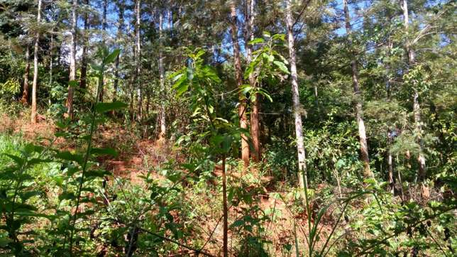 prime agricultural land. Two acre piece of land in MUKURWEINI NYERI Co Karaba - image 2
