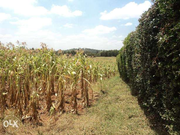 Chunga Mali 1 acre available for Sale Limuru - image 3