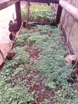Upstairs seedlings and fruits for sale