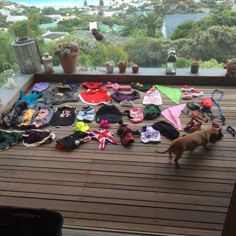 Dog Clothes & Leashes; Small Breed; VERY high Quality & Large Quantity Hout Bay - image 2