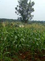 Land on sale in Rongo