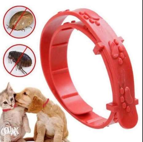 Pets protection from 500 insects