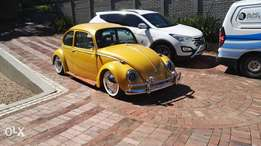 Stunning one of a kind beetle for sale