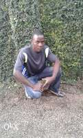 Am looking for a job