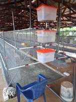 semi automatic battery cages