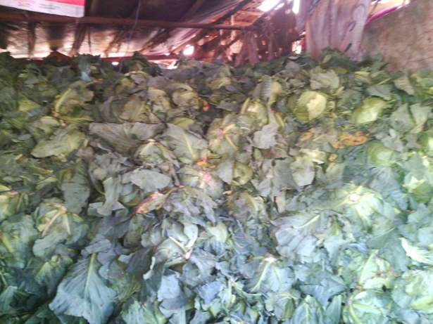 Cabbage retailer and wholesellers Kangemi - image 2