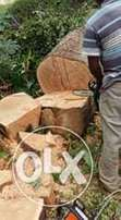 Specialised tree fellers and Garden services