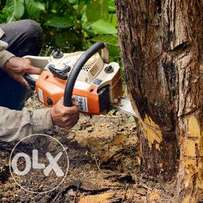 Tree cutting, pruning and removal