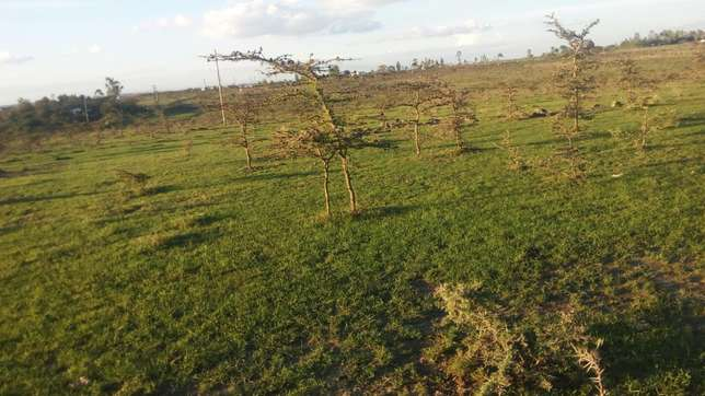 Plots and 1/4 acre ..very prime at an affordable price..Rangau centre Ongata Rongai - image 2