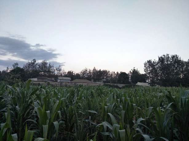Land in Matasya Ngong, 8 Acres for sale Parklands - image 2