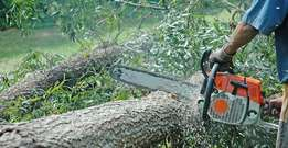 we do gardern clean up,tree felling &stump removal