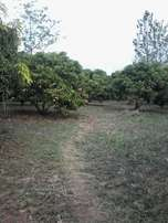 6.5 acres with mango trees at Makuyu, Kariaini, 1.7 kms off tarmac