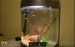 Aquarium Fish Tank + Air Pumper + Fishes + Decorations