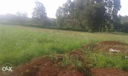 Half an acre for sale in Muthaiga North