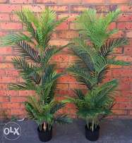 2 x Artificial Areca Palm Tree's 6ft Height