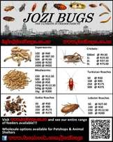 Mealworms, Superworms, Dubia Roaches, Lobster Roaches, Turkistan Roach