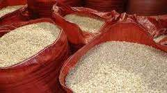 Good Quality white &Yellow Maize for animal feed