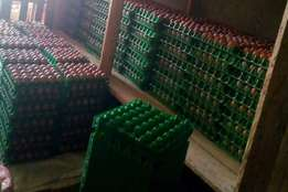 Jumbo eggs and chickens for sell in a low price..