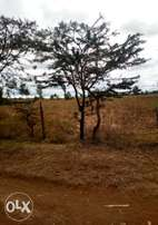 Another 8plots/1 acre for sale at Njoro Kenyatta