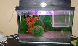 guppy fish and tank for sale