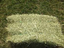 Quality Alfalfa Hay for sale at very Cheap