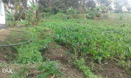 Spinach /Cabbages for sale at 15.00 per kg