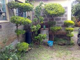 3 bedroom bungalow for sale in kahawa wendani 4.5m