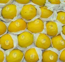 kindly order your best quality lemon with us