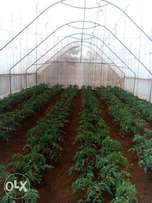 Green House fully equipped