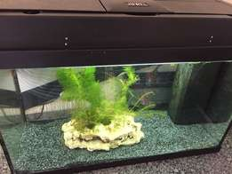 Juwel Rekord 600 Fish Tank - Just add fish!
