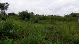 Full Plot of Land for Sale at Fagbile Phase 4 Ijegun