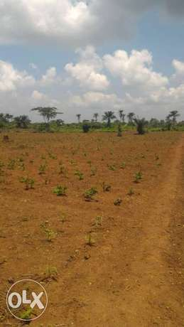 Affordable 3600 sqm Farm Land for sale at 700k Amuwo Odofin - image 2