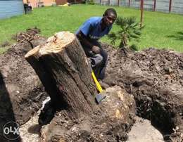 Tree Felling and Stump removal. and Landscaping