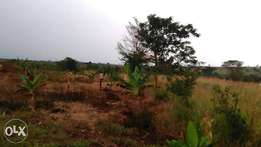 60acres of land for sale in kapeka each is at 5m