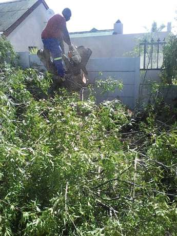 The bush clearing team Brackenfell - image 1