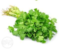 Fresh Dhania For Sale