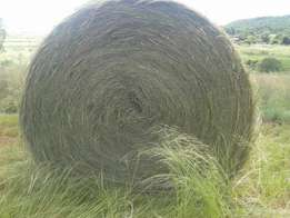 Teff bale for sale