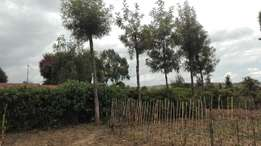 2 acres in Ragati Nanyuki for sale