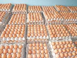 eggs and chicken for sale