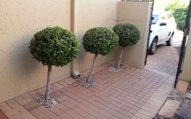 Landscaping, Gardening, Ruble Removal, Tree felling, Plumbing & others Glenvista - image 4