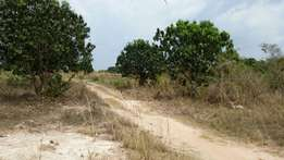 Farming land for sale lease at Nsawam Dieso