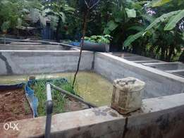 Fish ponds for rental
